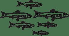 Mercato del pesce Visit Mola di Bari Puglia