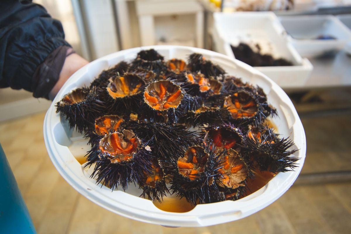 Coop Pescivendoli Pescheria Martinelli Mola di Bari Puglia